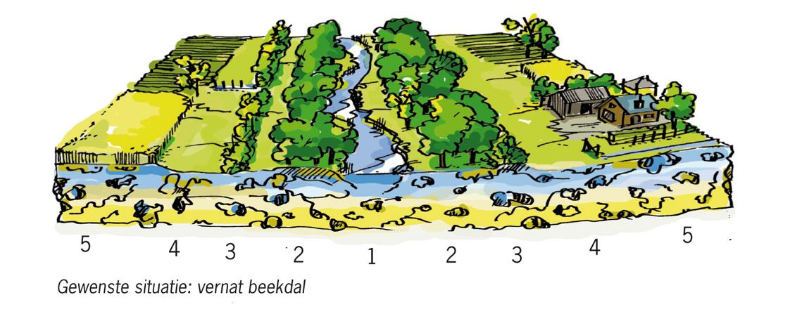 Figuur 2. Inrichting van een beekdal volgens het 5B-concept (Verdonschot, 2010)