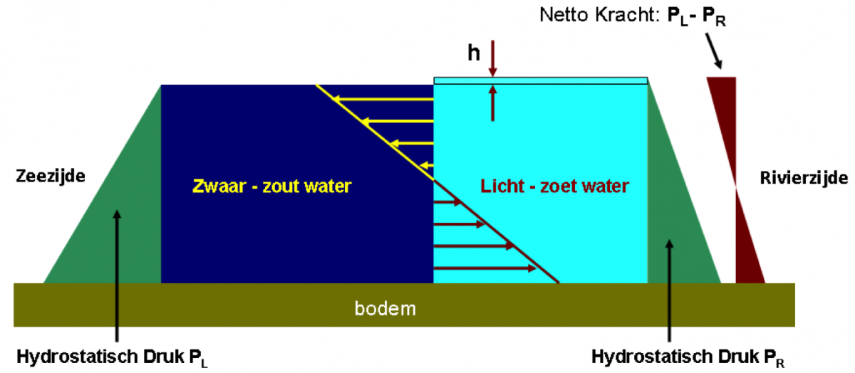 Afbeelding 2. Links in het zwaarder wegende (zoute) water neemt de waterdruk (groene driehoek) sneller toe dan rechts in het lichtere (zoete) water. Voor evenwicht is rechts een geringe waterstandverhoging (h) nodig. Het verschil tussen de waterdrukken levert de drukverdeling (bruine driehoeken) welke de geschetste uitwisselingsstroming (pijlen) aandrijft (Friocourt e.a. 2012).
